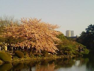新宿御苑に行ってきました。 4