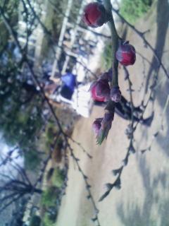 新宿御苑に行ってきました。 3